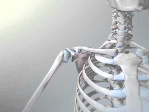 video artroscopia hombro: