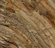 Pregunta: ¿Qué especie de madera es más adecuada para cada aplicación?
